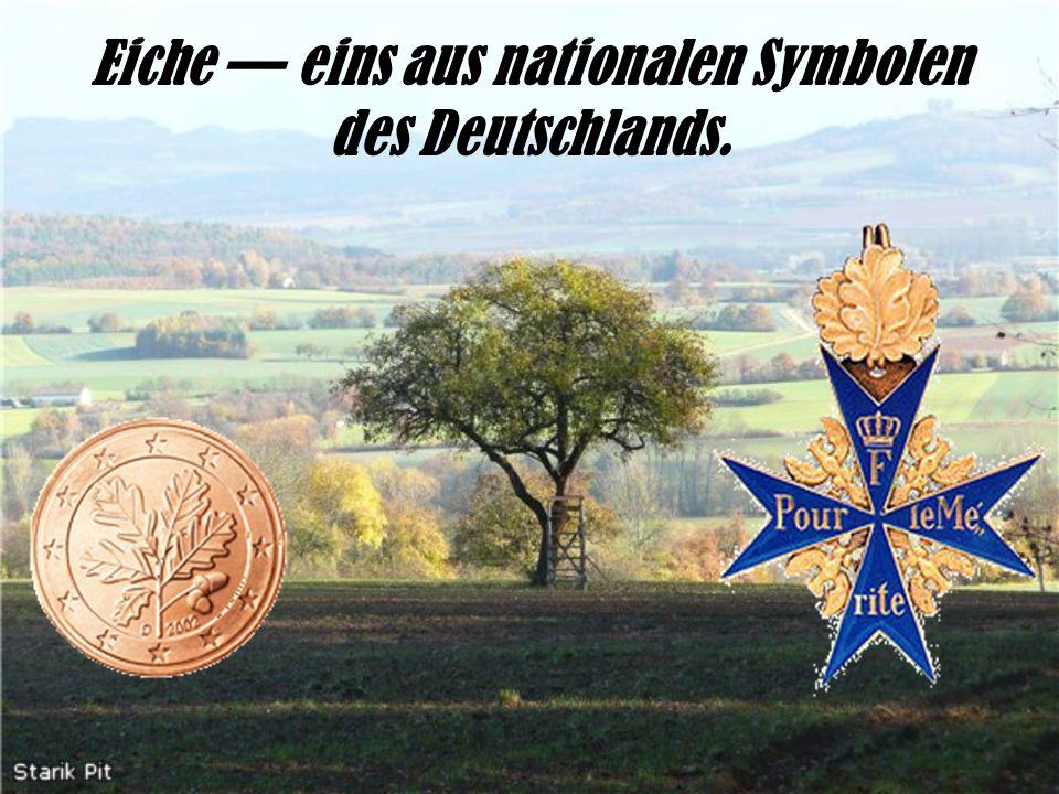 Eiche — eins aus nationalen Symbolen des Deutschlands.
