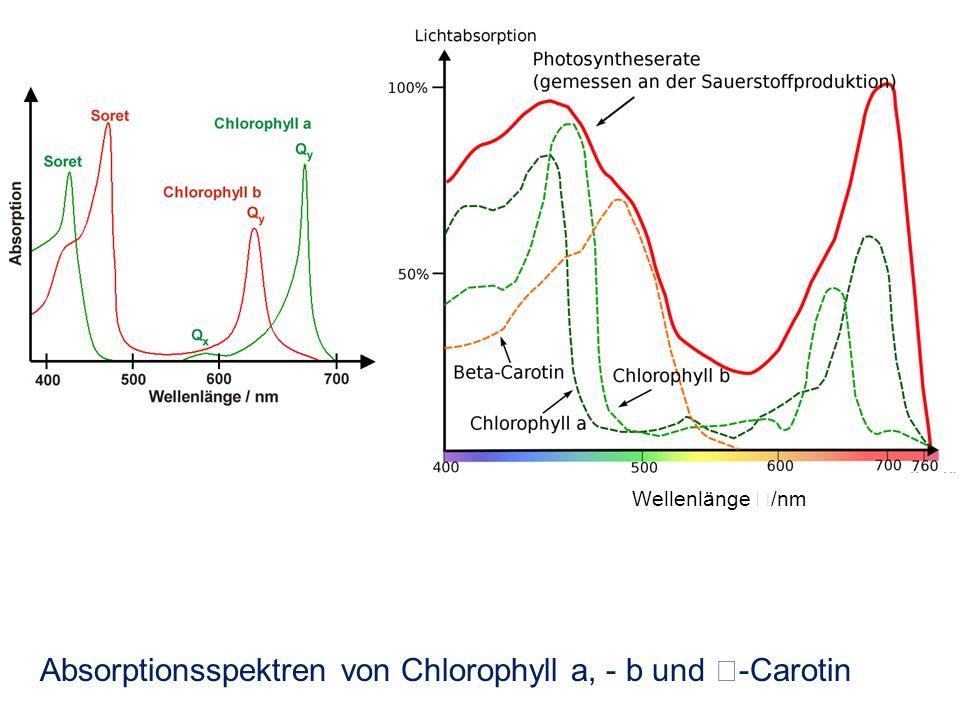 Absorptionsspektren von Chlorophyll a, - b und -Carotin