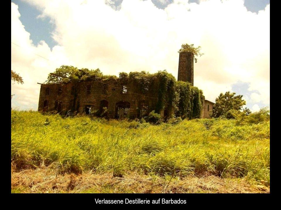 Verlassene Destillerie auf Barbados