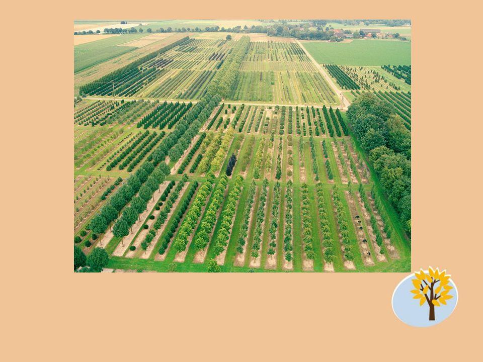 Mehr als 350.000 Pflanzen Über 10.000 Artikel Auf 120 Feldern