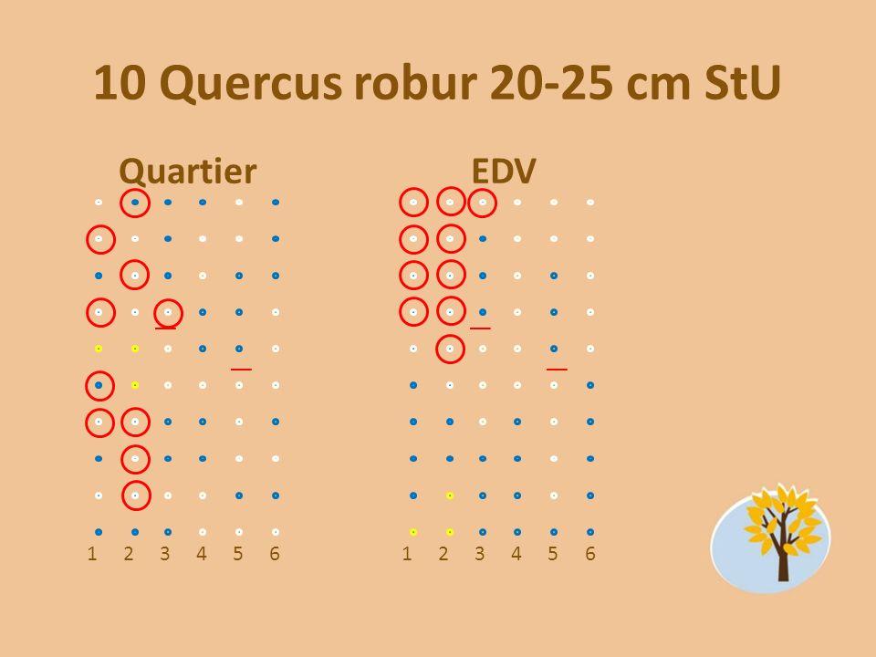 10 Quercus robur 20-25 cm StU Quartier EDV 1 2 3 4 5 6 1 2 3 4 5 6