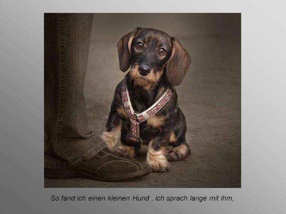 So fand ich einen kleinen Hund , ich sprach lange mit ihm,