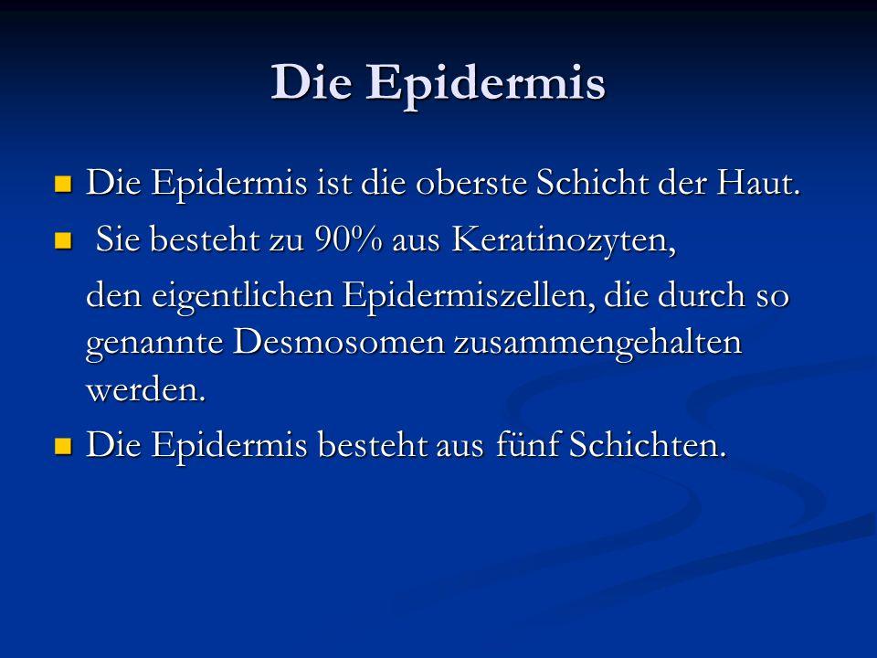 Die Epidermis Die Epidermis ist die oberste Schicht der Haut.