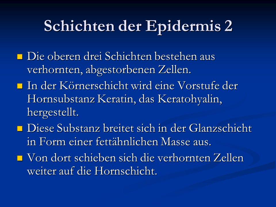 Schichten der Epidermis 2