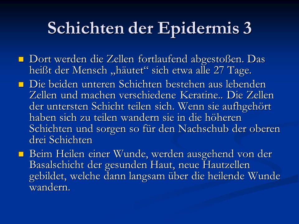 Schichten der Epidermis 3