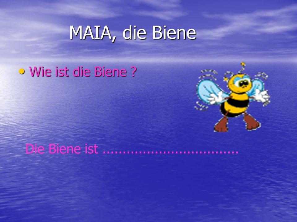 MAIA, die Biene Wie ist die Biene