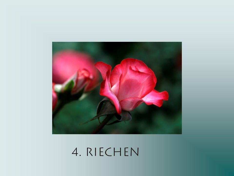 4. Riechen