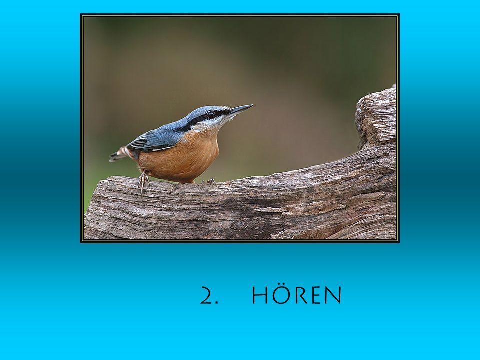 2. Hören