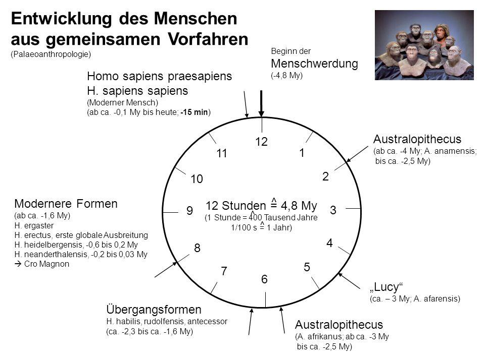 (1 Stunde = 400 Tausend Jahre
