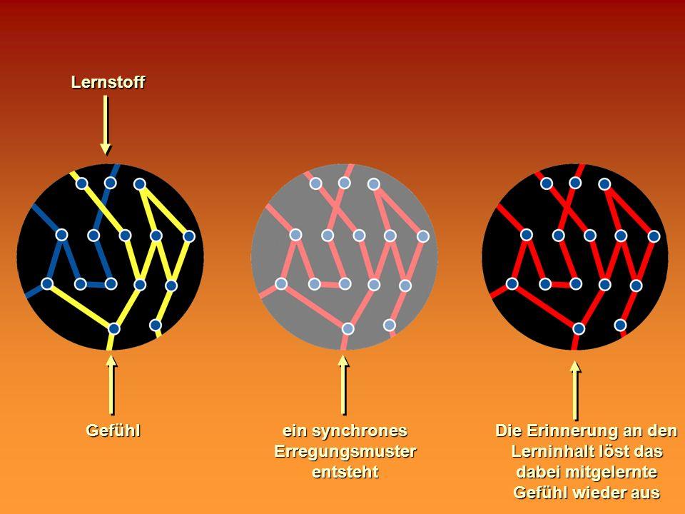 ein synchrones Erregungsmuster entsteht