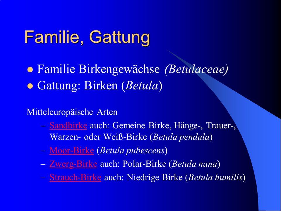 Familie, Gattung Familie Birkengewächse (Betulaceae)