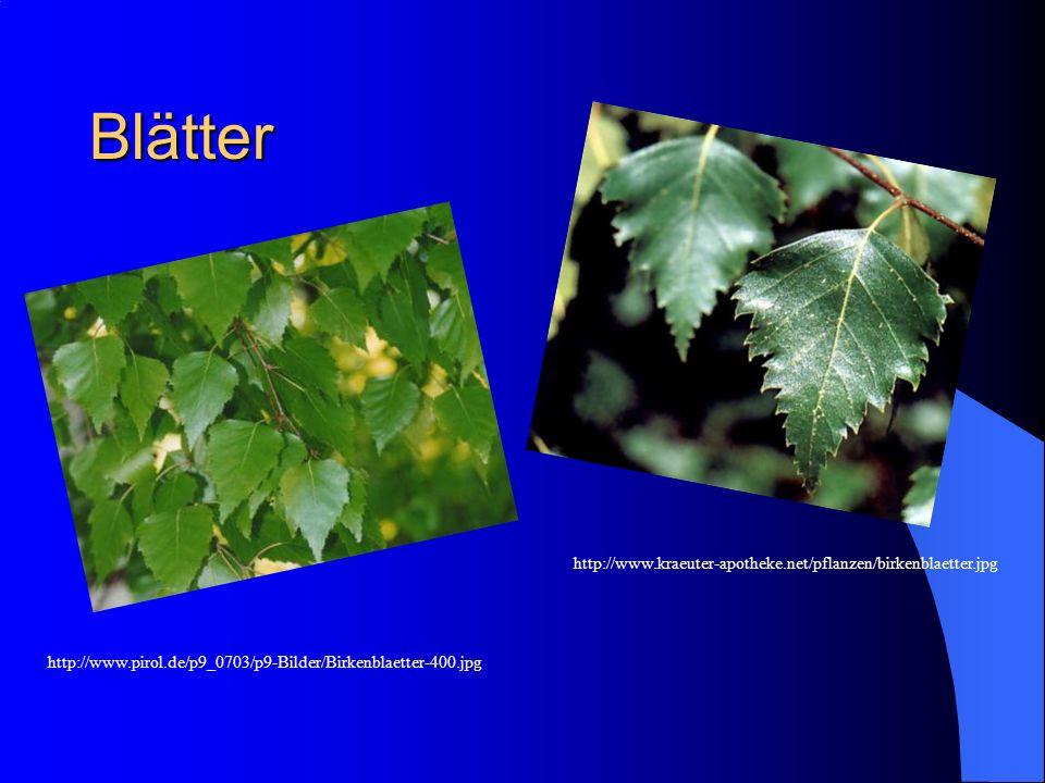 Blätter http://www.kraeuter-apotheke.net/pflanzen/birkenblaetter.jpg