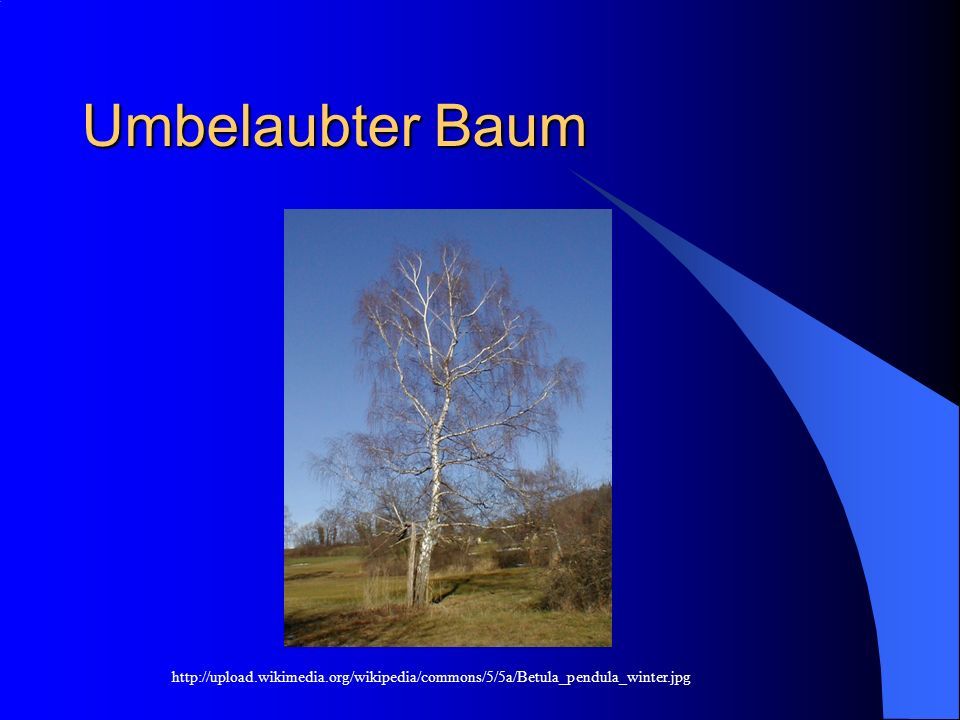 Umbelaubter Baum http://upload.wikimedia.org/wikipedia/commons/5/5a/Betula_pendula_winter.jpg