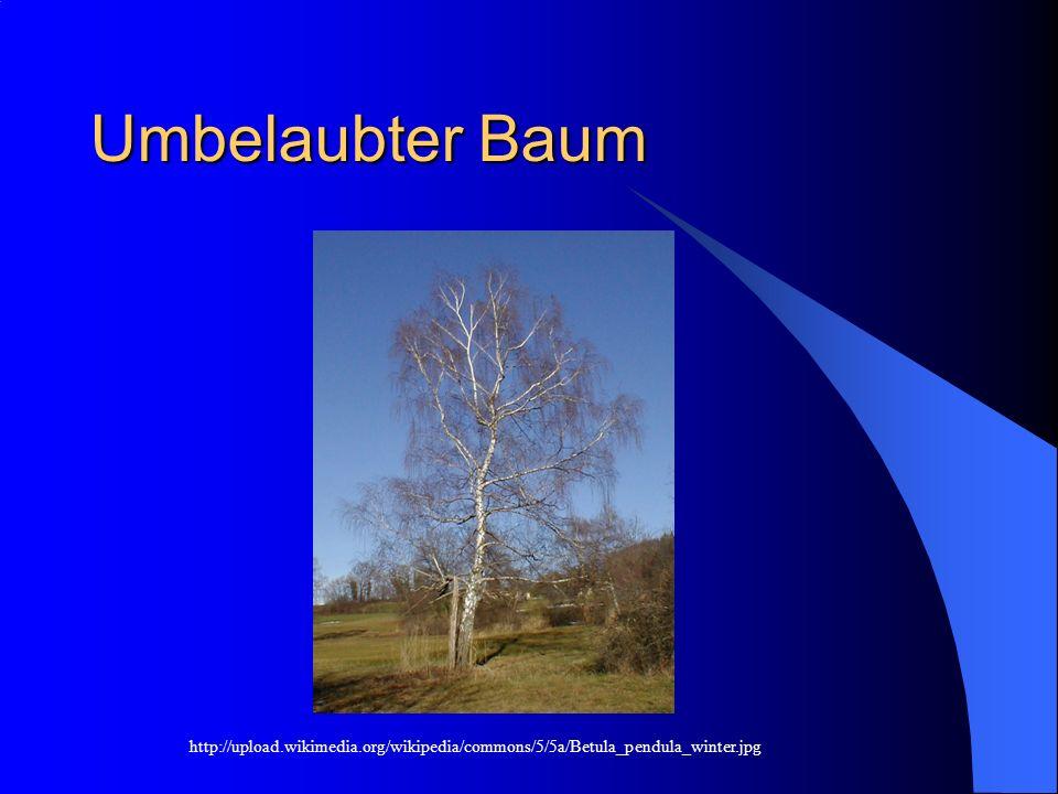 Umbelaubter Baum http://upload.wikimedia.org/wikipedia/commons/5/5a/Betula_pendula_winter.jpg
