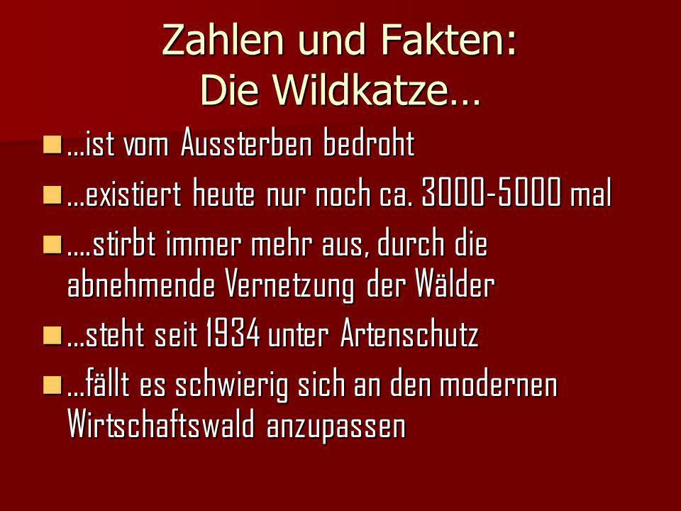Zahlen und Fakten: Die Wildkatze…