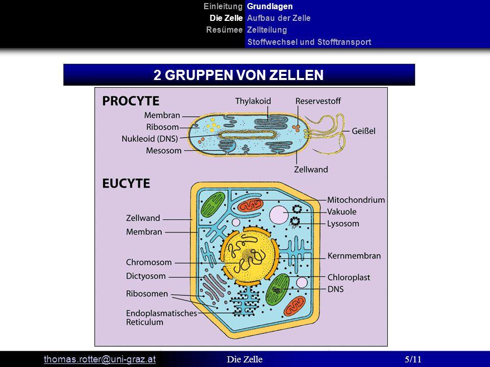 2 GRUPPEN VON ZELLEN thomas.rotter@uni-graz.at Die Zelle 5/11