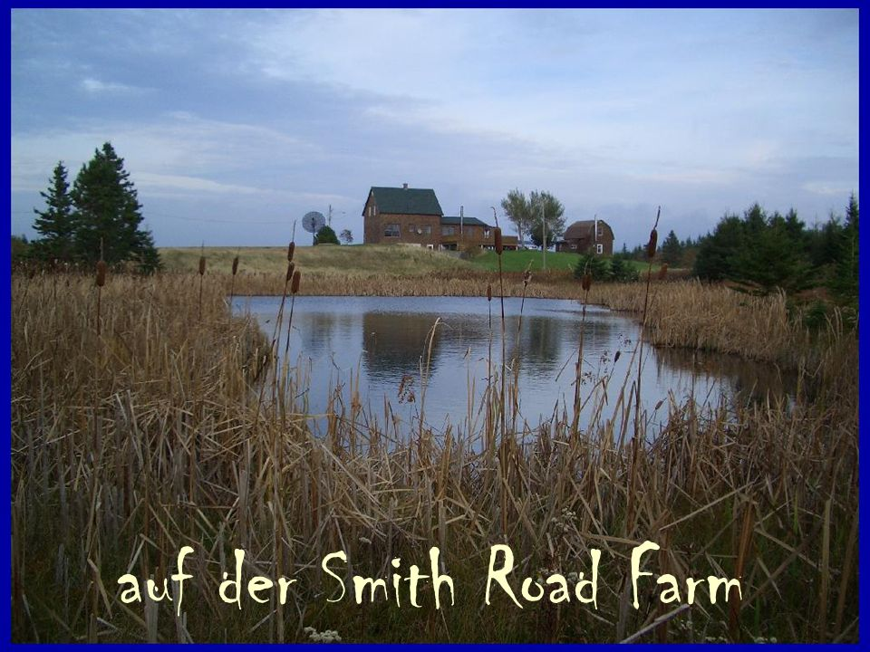 auf der Smith Road Farm