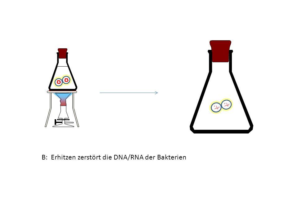 B: Erhitzen zerstört die DNA/RNA der Bakterien
