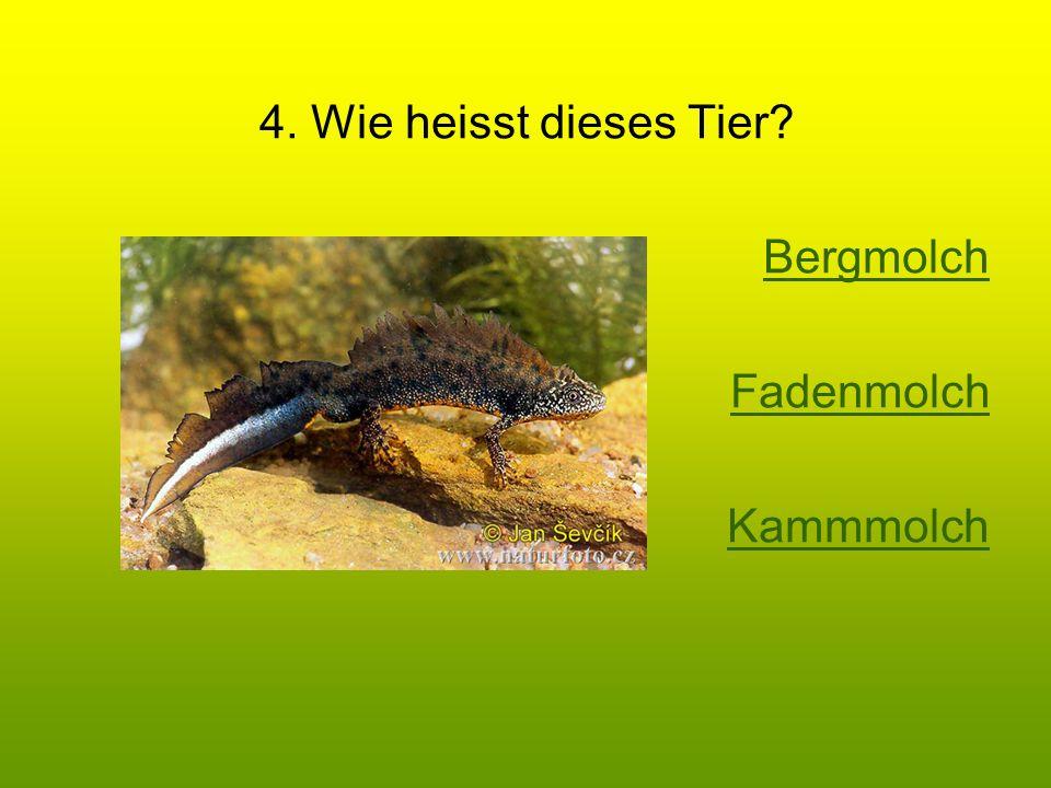 4. Wie heisst dieses Tier Bergmolch Fadenmolch Kammmolch