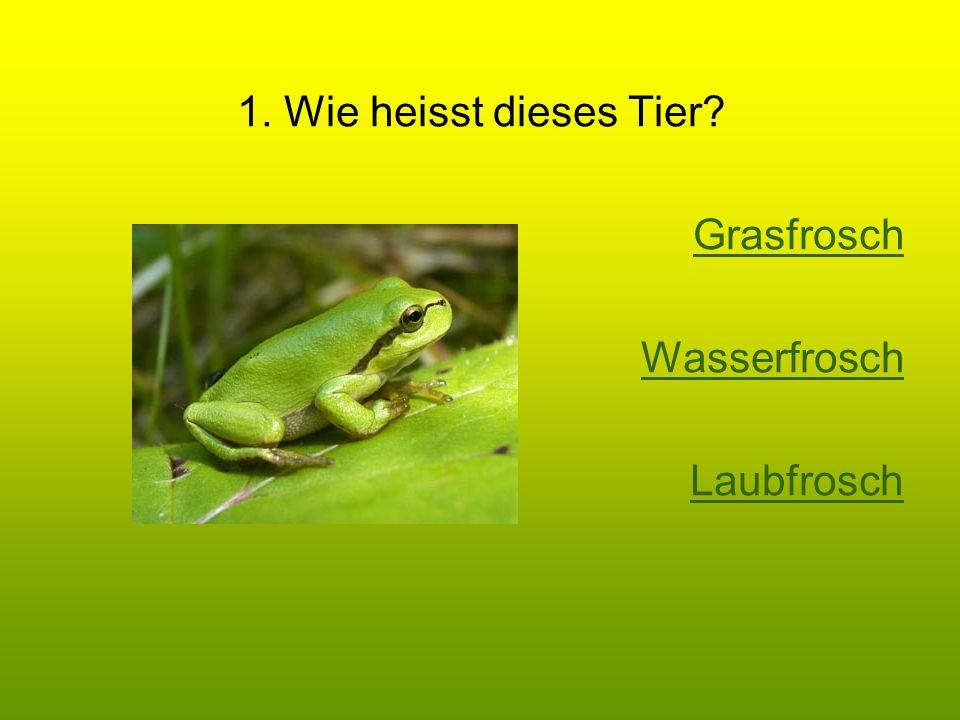 1. Wie heisst dieses Tier Grasfrosch Wasserfrosch Laubfrosch