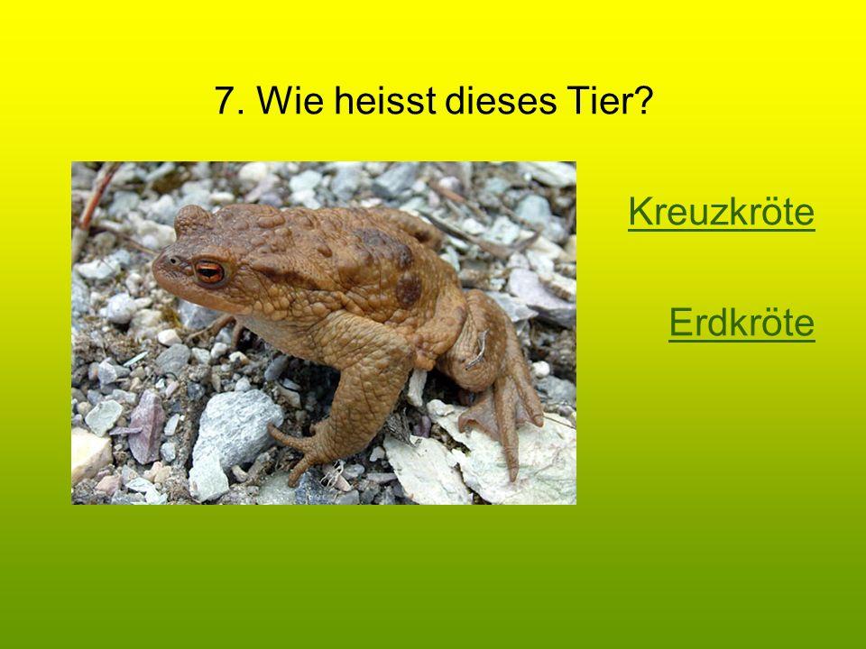 7. Wie heisst dieses Tier Kreuzkröte Erdkröte
