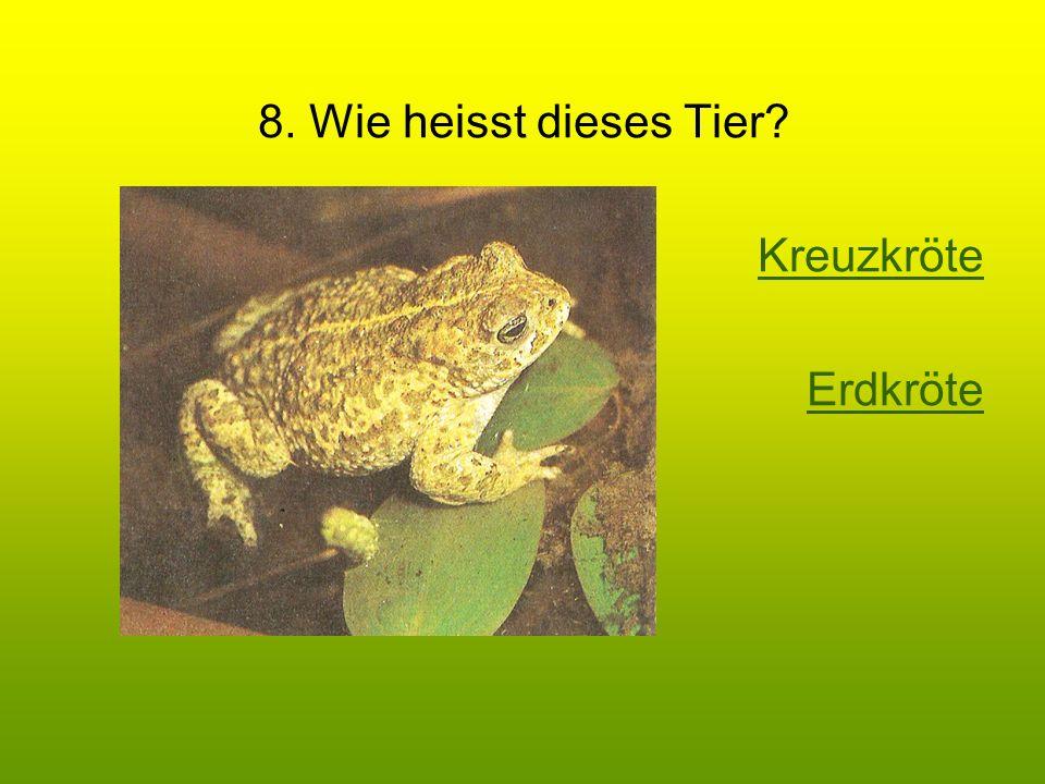 8. Wie heisst dieses Tier Kreuzkröte Erdkröte