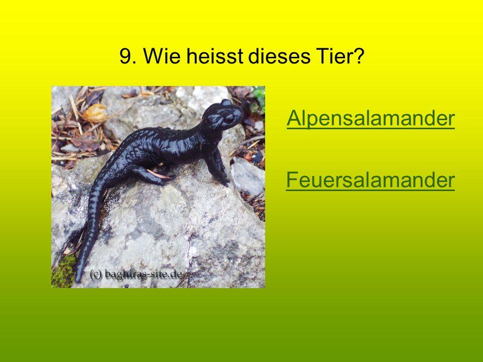 9. Wie heisst dieses Tier Alpensalamander Feuersalamander