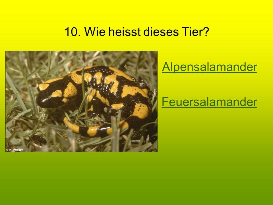 10. Wie heisst dieses Tier Alpensalamander Feuersalamander
