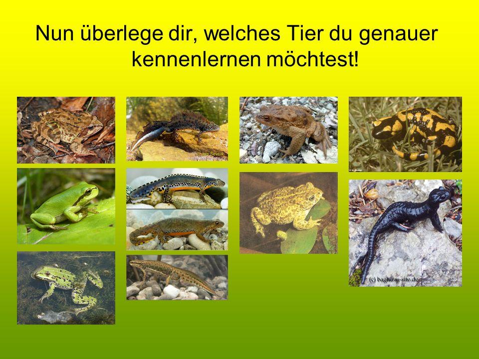 Nun überlege dir, welches Tier du genauer kennenlernen möchtest!