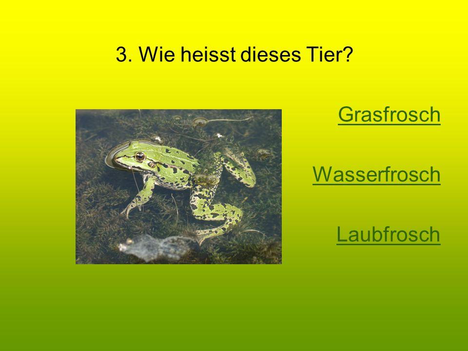3. Wie heisst dieses Tier Grasfrosch Wasserfrosch Laubfrosch