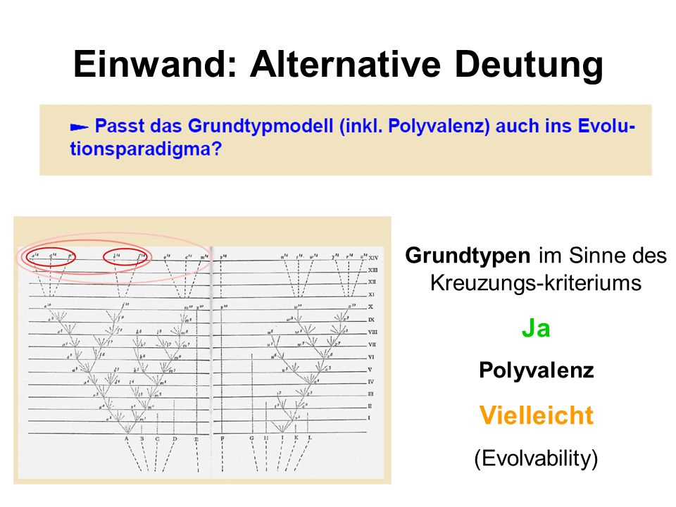 Einwand: Alternative Deutung