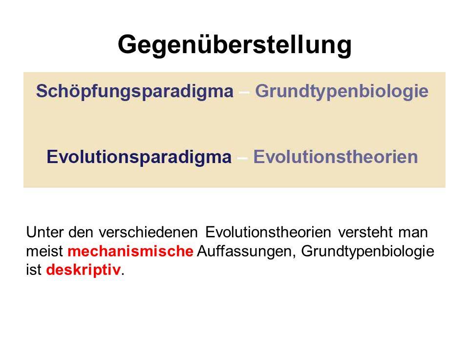 Gegenüberstellung Unter den verschiedenen Evolutionstheorien versteht man meist mechanismische Auffassungen, Grundtypenbiologie ist deskriptiv.