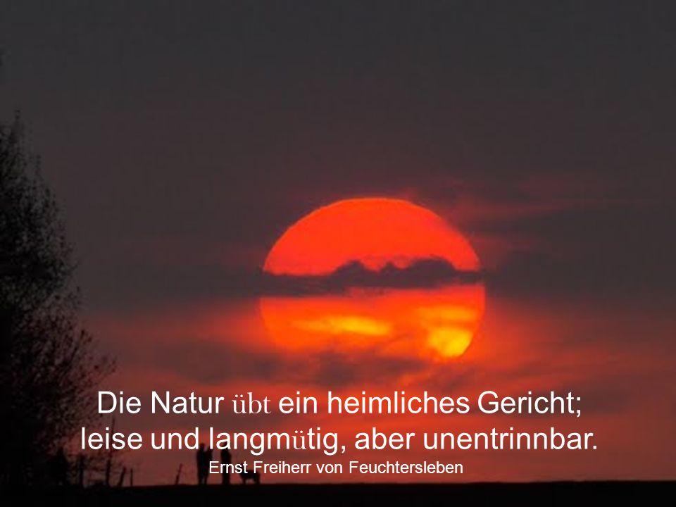 Die Natur übt ein heimliches Gericht; leise und langmütig, aber unentrinnbar.