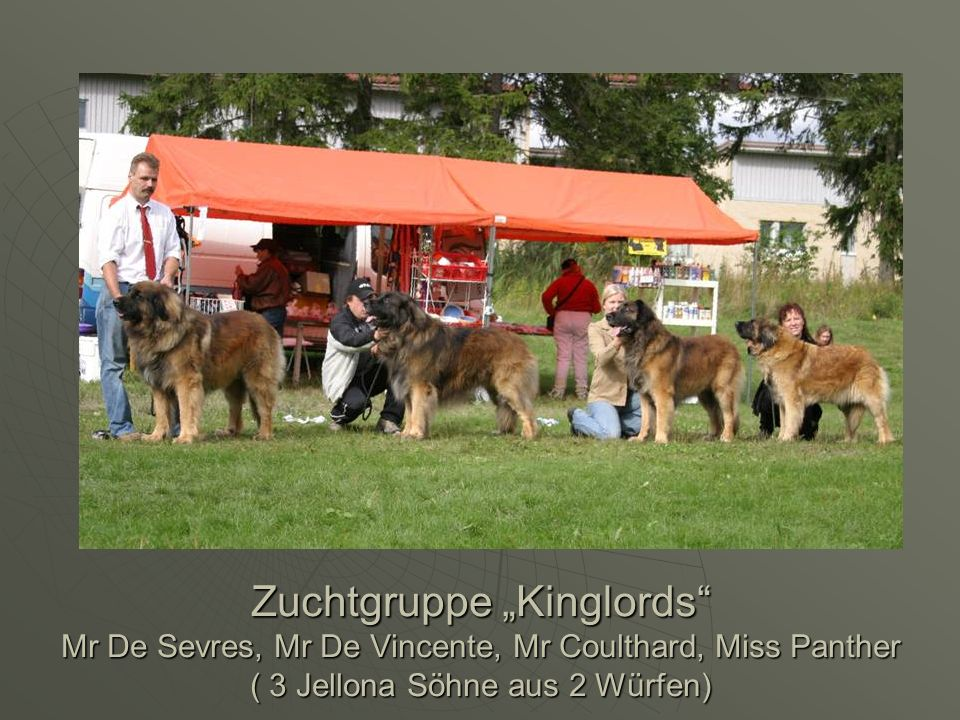 "Zuchtgruppe ""Kinglords Mr De Sevres, Mr De Vincente, Mr Coulthard, Miss Panther ( 3 Jellona Söhne aus 2 Würfen)"