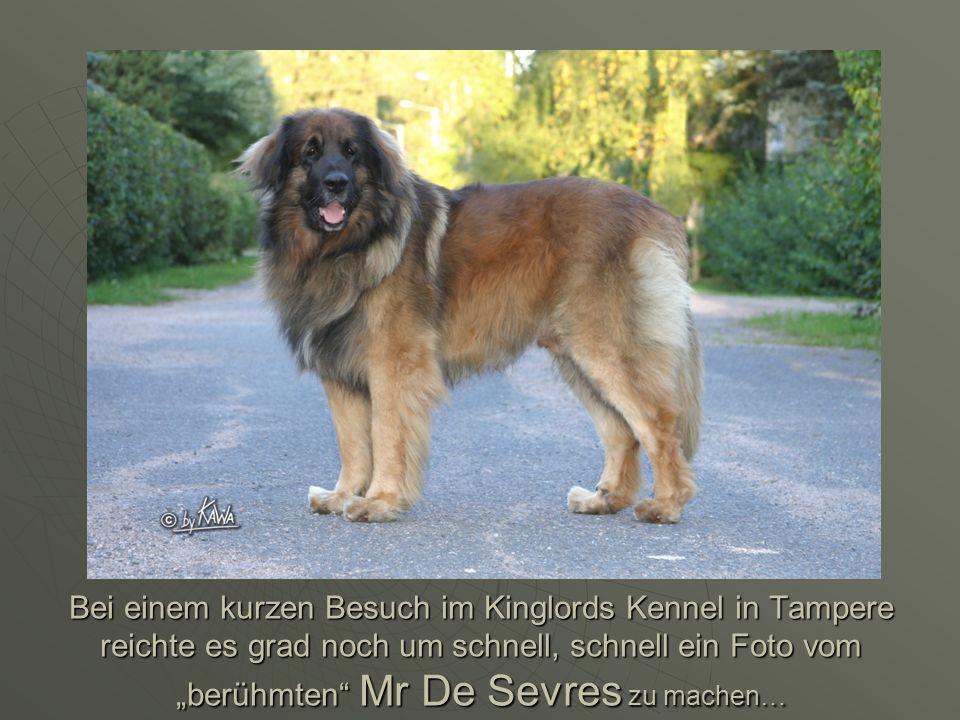 """Bei einem kurzen Besuch im Kinglords Kennel in Tampere reichte es grad noch um schnell, schnell ein Foto vom """"berühmten Mr De Sevres zu machen…"""