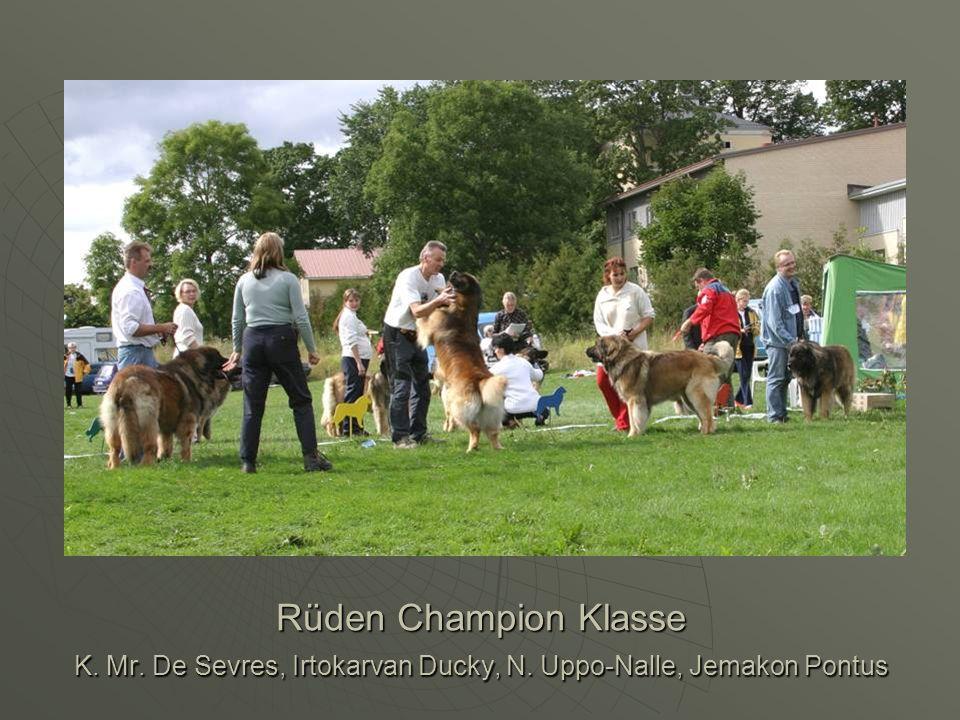 Rüden Champion Klasse K. Mr. De Sevres, Irtokarvan Ducky, N