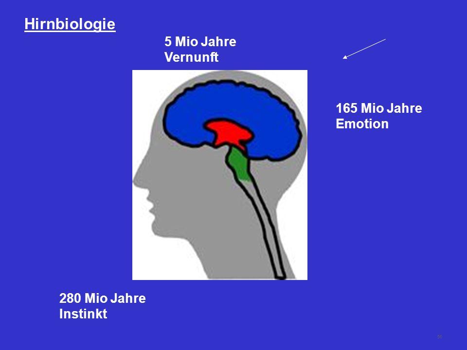 Hirnbiologie 5 Mio Jahre Vernunft 165 Mio Jahre Emotion