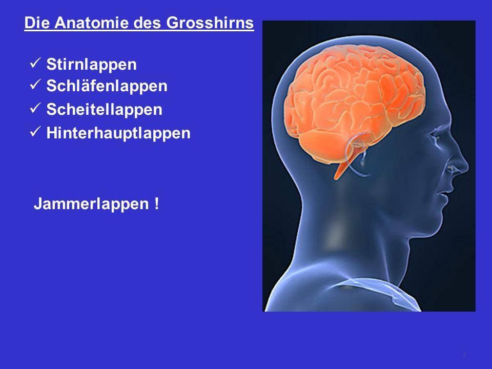 Die Anatomie des Grosshirns