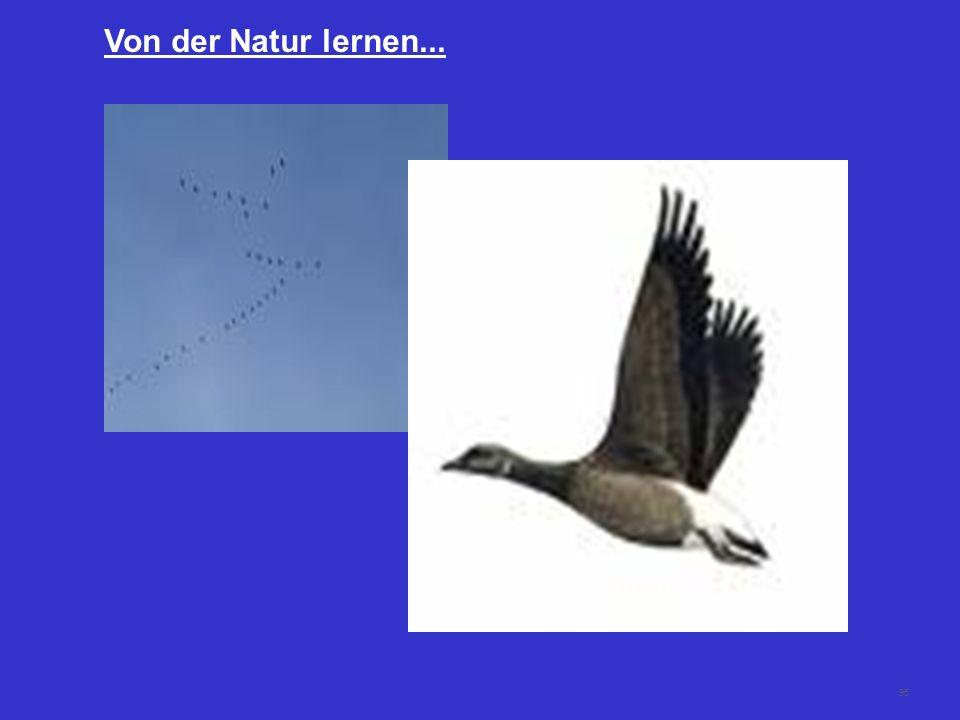 Von der Natur lernen...