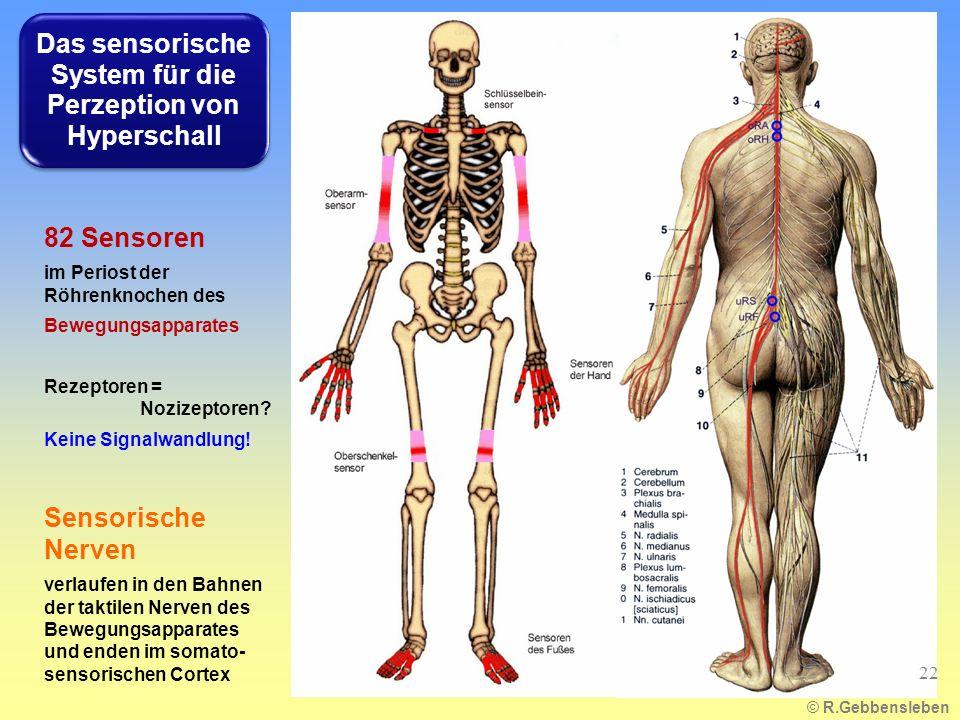 Das sensorische System für die Perzeption von Hyperschall