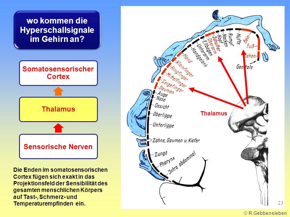 wo kommen die Hyperschallsignale im Gehirn an
