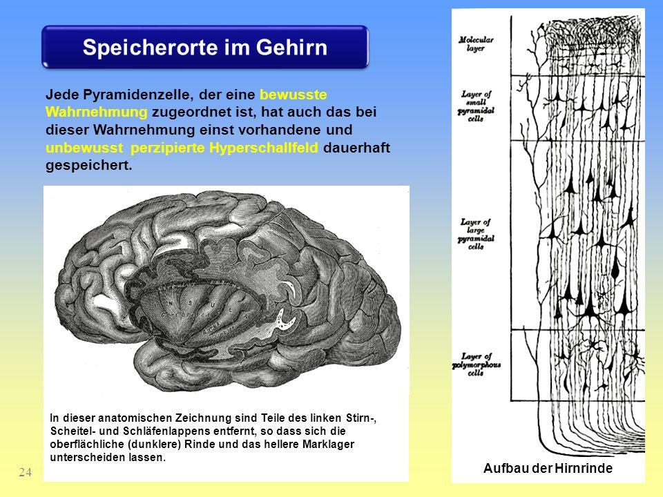 Speicherorte im Gehirn