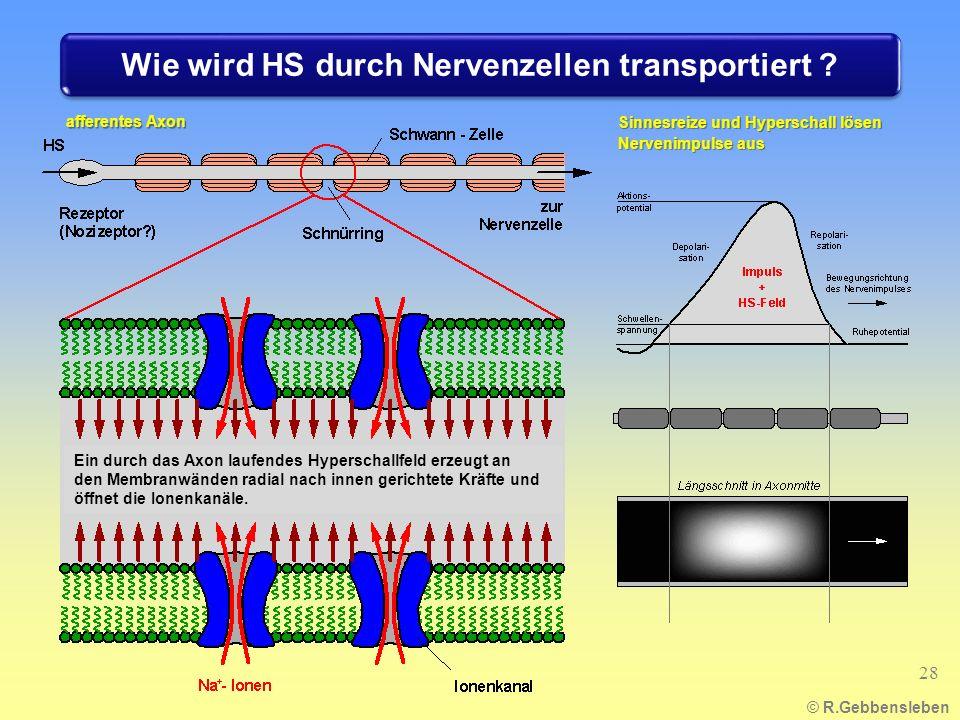 Wie wird HS durch Nervenzellen transportiert