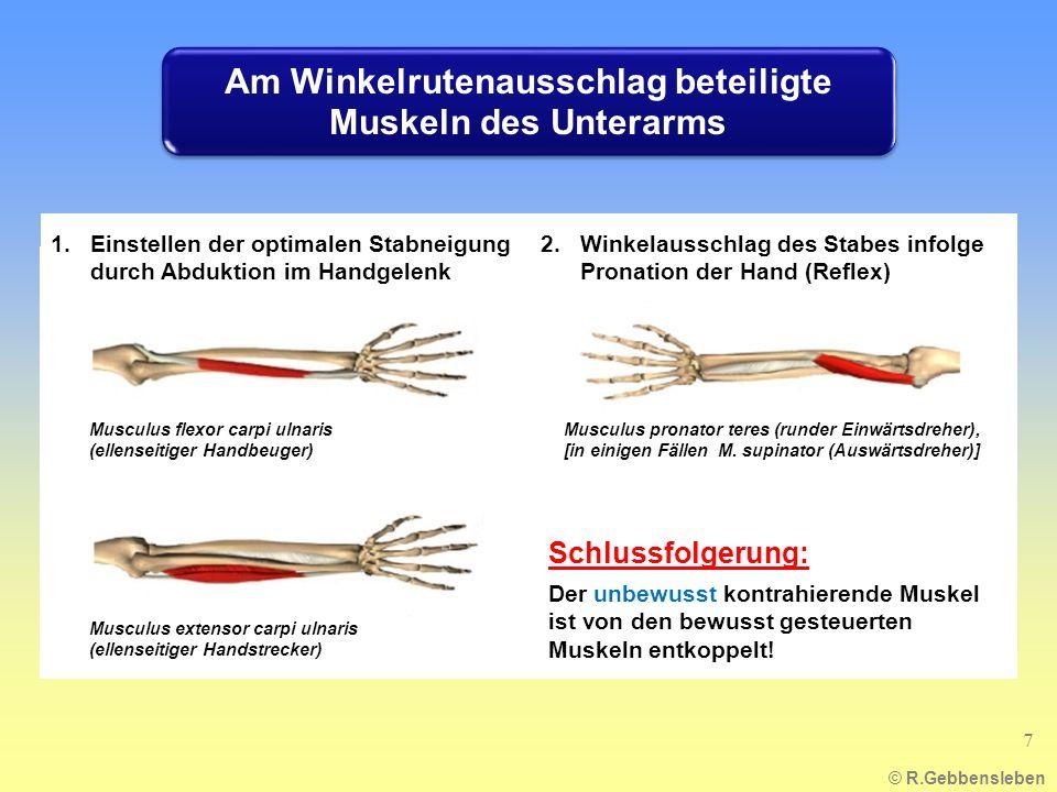 Am Winkelrutenausschlag beteiligte Muskeln des Unterarms
