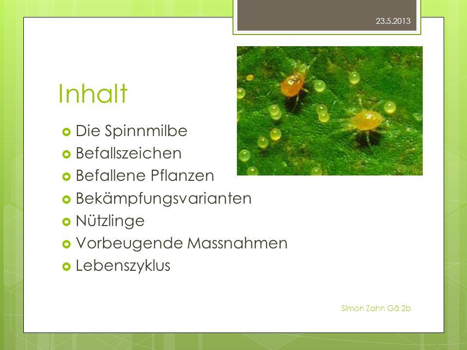 Inhalt Die Spinnmilbe Befallszeichen Befallene Pflanzen