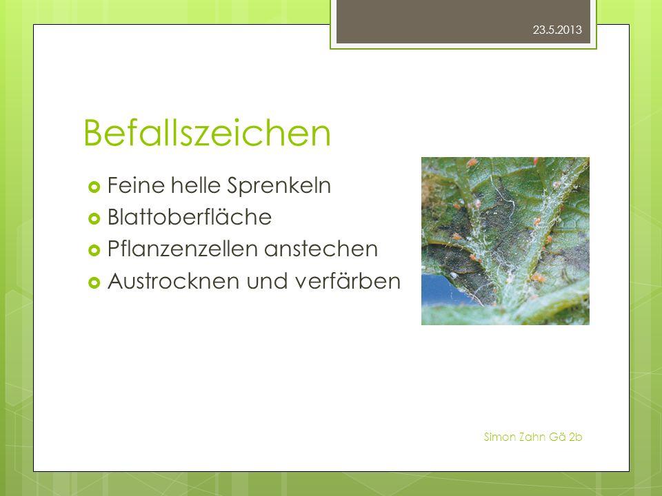 Befallszeichen Feine helle Sprenkeln Blattoberfläche