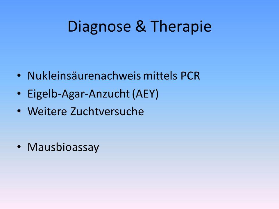 Diagnose & Therapie Nukleinsäurenachweis mittels PCR