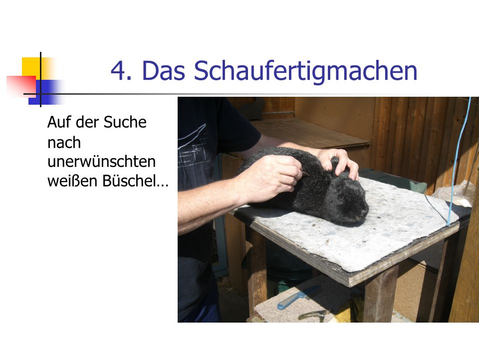4. Das Schaufertigmachen