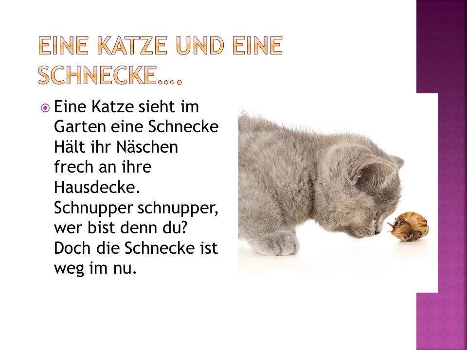 Eine Katze und eine Schnecke….