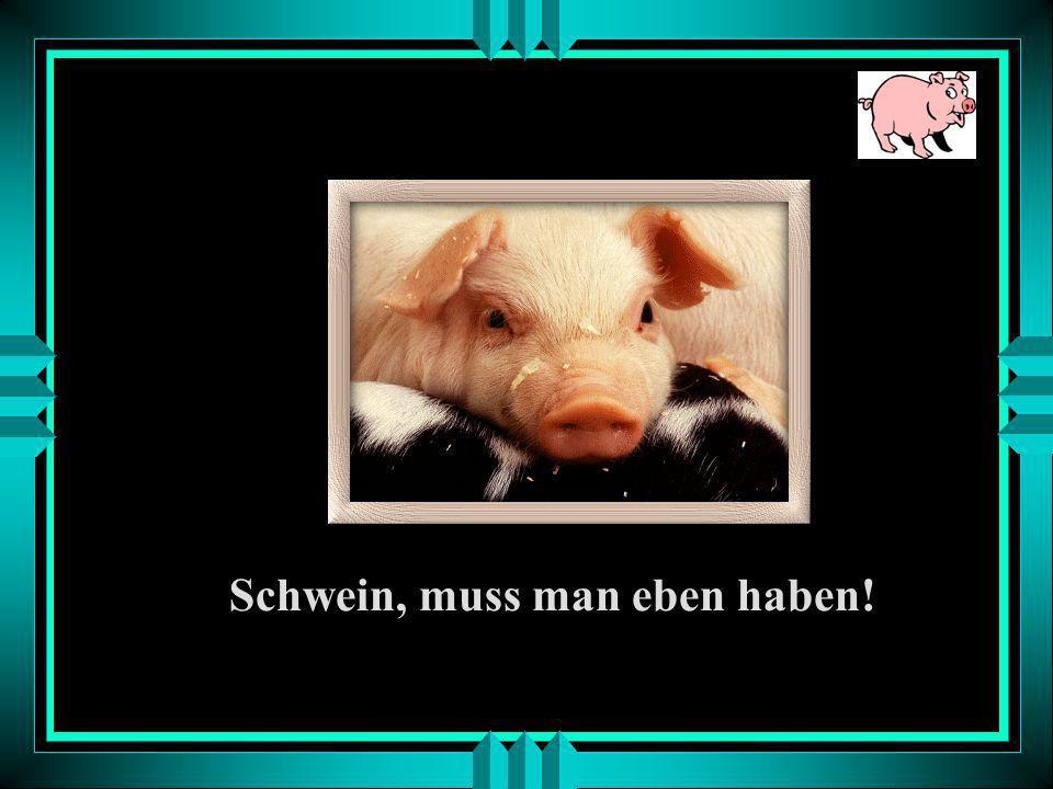 Schwein, muss man eben haben!